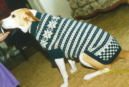Knitting Patterns For Dog Sweaters : Knitting Home Made Pet Sweaters: Knit a Custom Stylish Dog ...