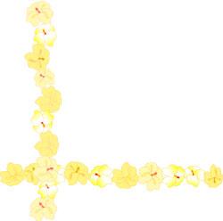 Hibiscus Flowers Clip Art Borders