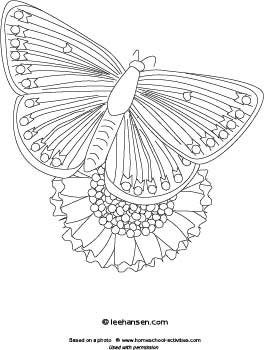 Exotic butterfly and flower coloring page for teens